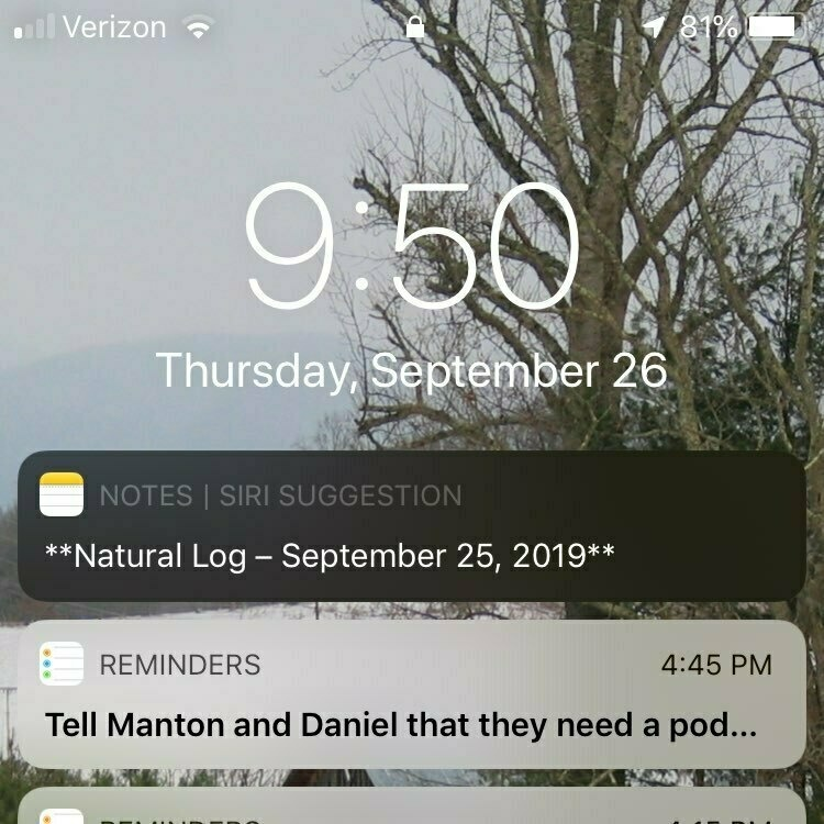 Screenshot of an iPhone lock screen showing a Siri Shortcuts suggestion for the note containing yesterday's Natural Log post draft.