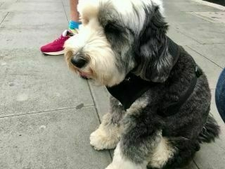 Petting this lovely doggo at the bus stop.