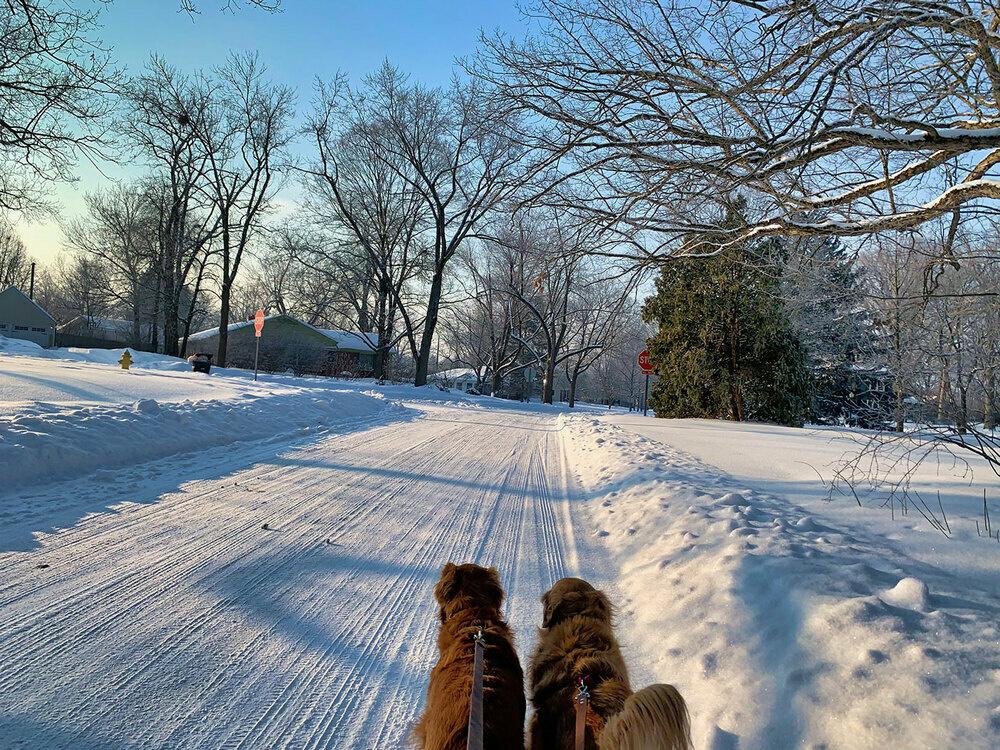 Walking my dogs
