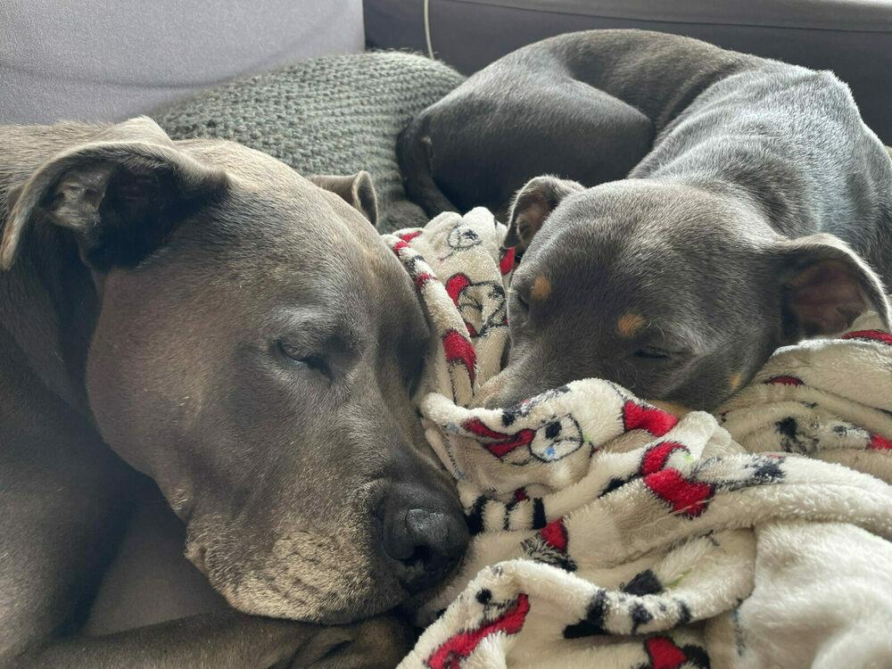 Hugo and Luna nuzzled together in a blanket