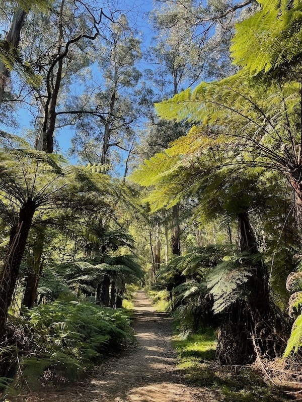 trees and ferns around a path, blue sky behind