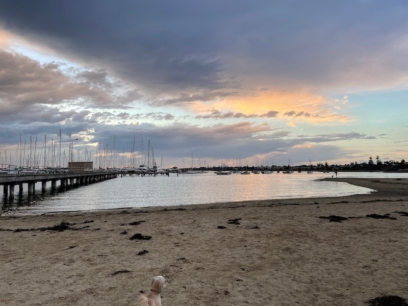 a view on the beach, pier to the left, dog's head just visible at the bottom of frame. a dark grey cloud in the sky, with light blue and pink around it