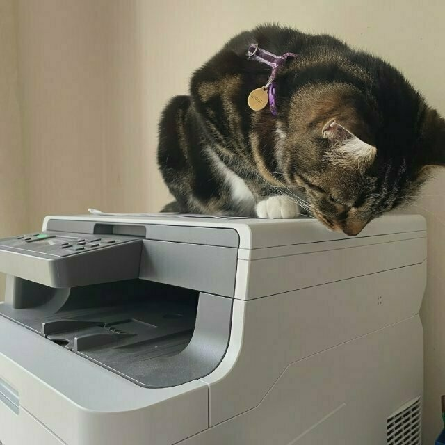 the same tabby cat on top of the printer, looking down