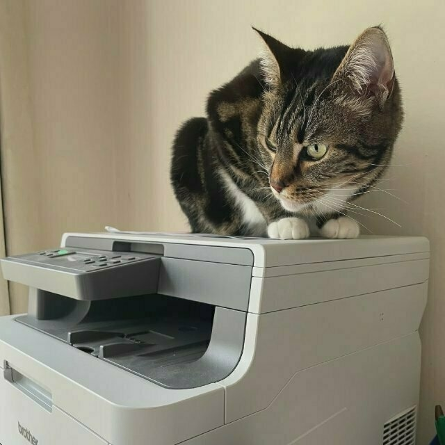 a tabby cat on top of a printer, looking left