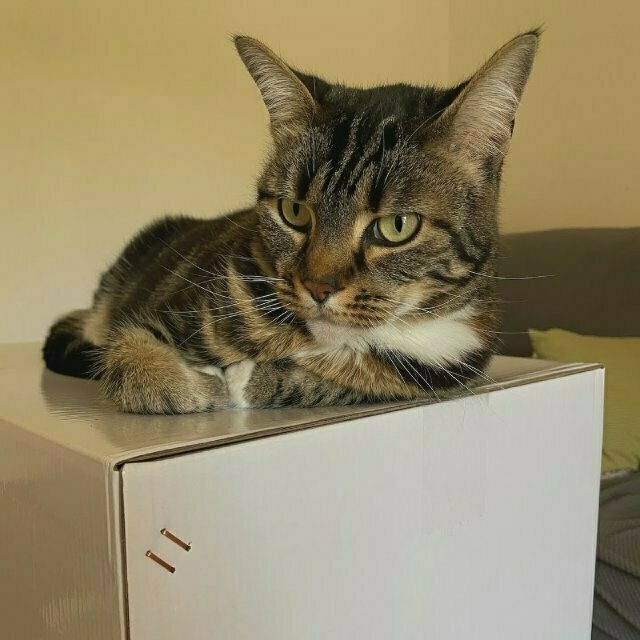 a tabby cat perches on top of a white box