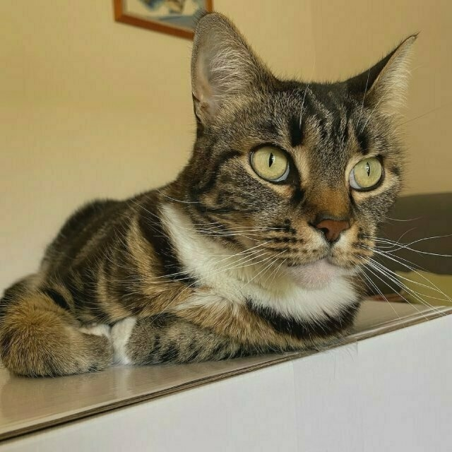 a tabby cat perches on top of a white box (different, closer angle)