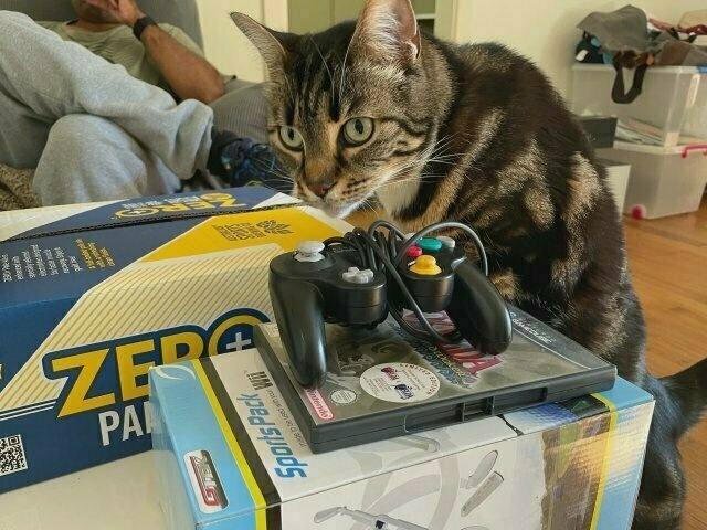 a tabby cat stands on her hind legs to examine Nintendo Wii boxes on a coffee table. a guy has a drink in the background